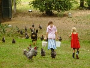 The chickens following Mary for the feed.
