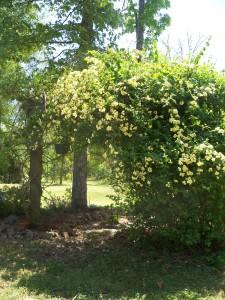 Our Flower Garden.