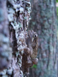 A frog on a tree.
